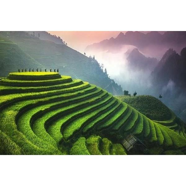 Truyền thuyết trà Bích Loa Xuân